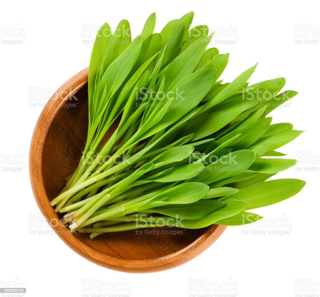Popcorn microgreen in wooden bowl over white stock photo