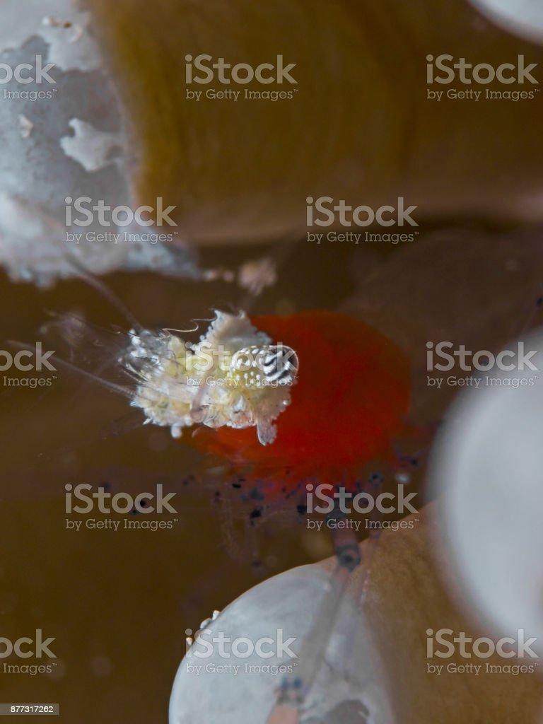 Popcorn Shrimp Stock Photo Download Image Now Istock