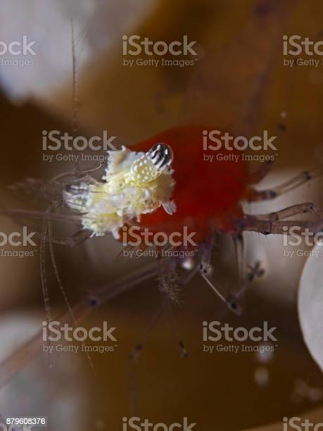 Popcorn Shrimp Stock Photo Download Image Now Istock