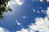 Poplar fluff flies against a bright blue sky, white clouds and tree crowns in the sunlight