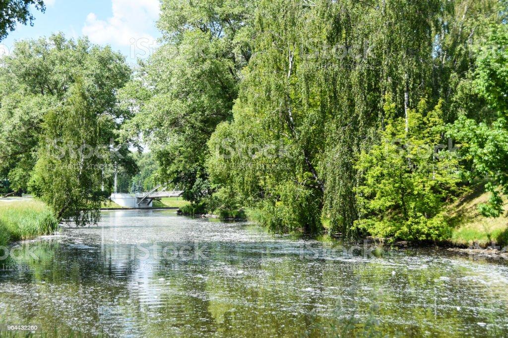 Populier pluis van bomen in de stad vliegen door de lucht, drijft in de rivier en allergie veroorzaakt bij de mens - Royalty-free Abeel Stockfoto