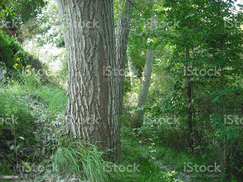 poplar, nature, river, trees, green, paradise, fairy, mountain, spain stock photo