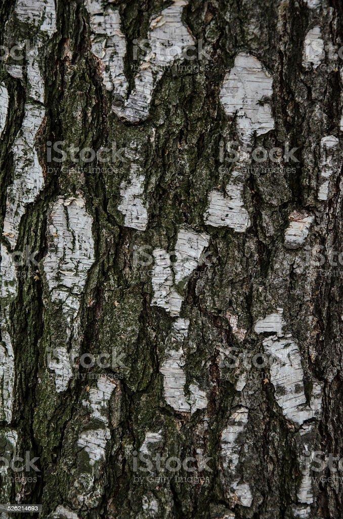 Poplar stock photo
