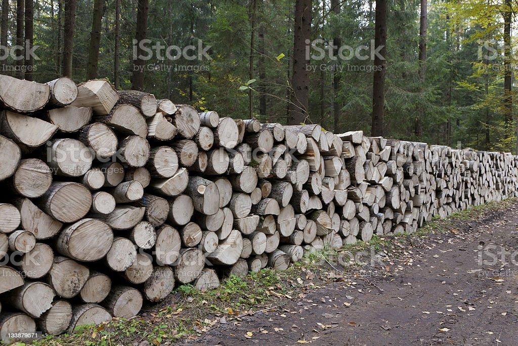 Poplar tree logs stacked lying stock photo