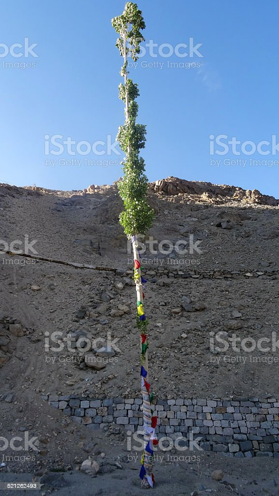 Poplar tree wrapped in prayer flags stock photo