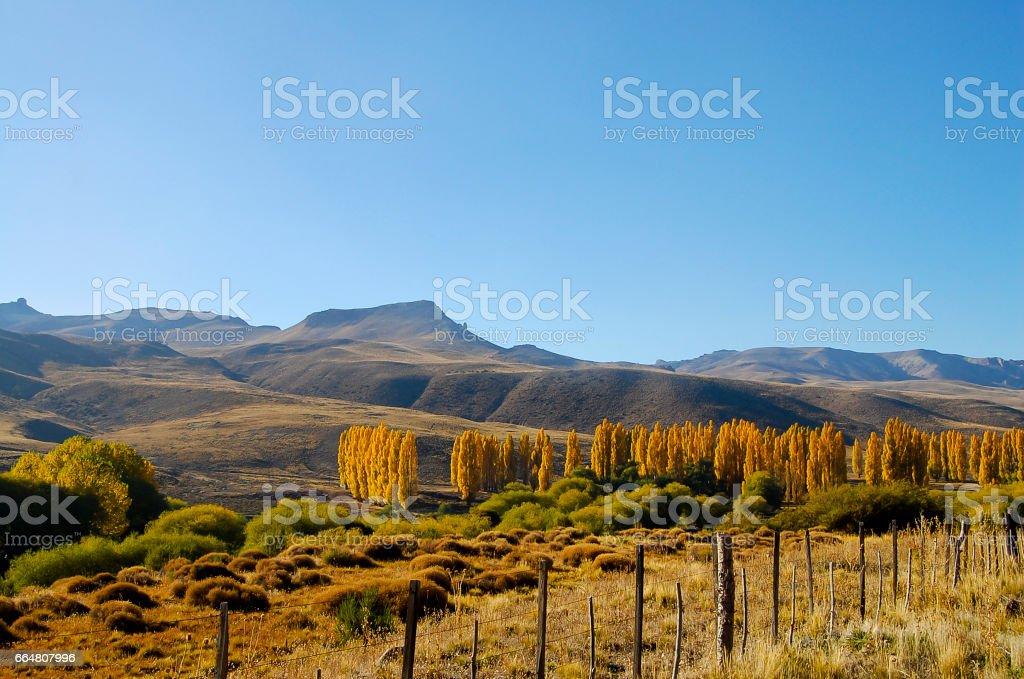 Poplar Trees - Patagonia - Argentina stock photo