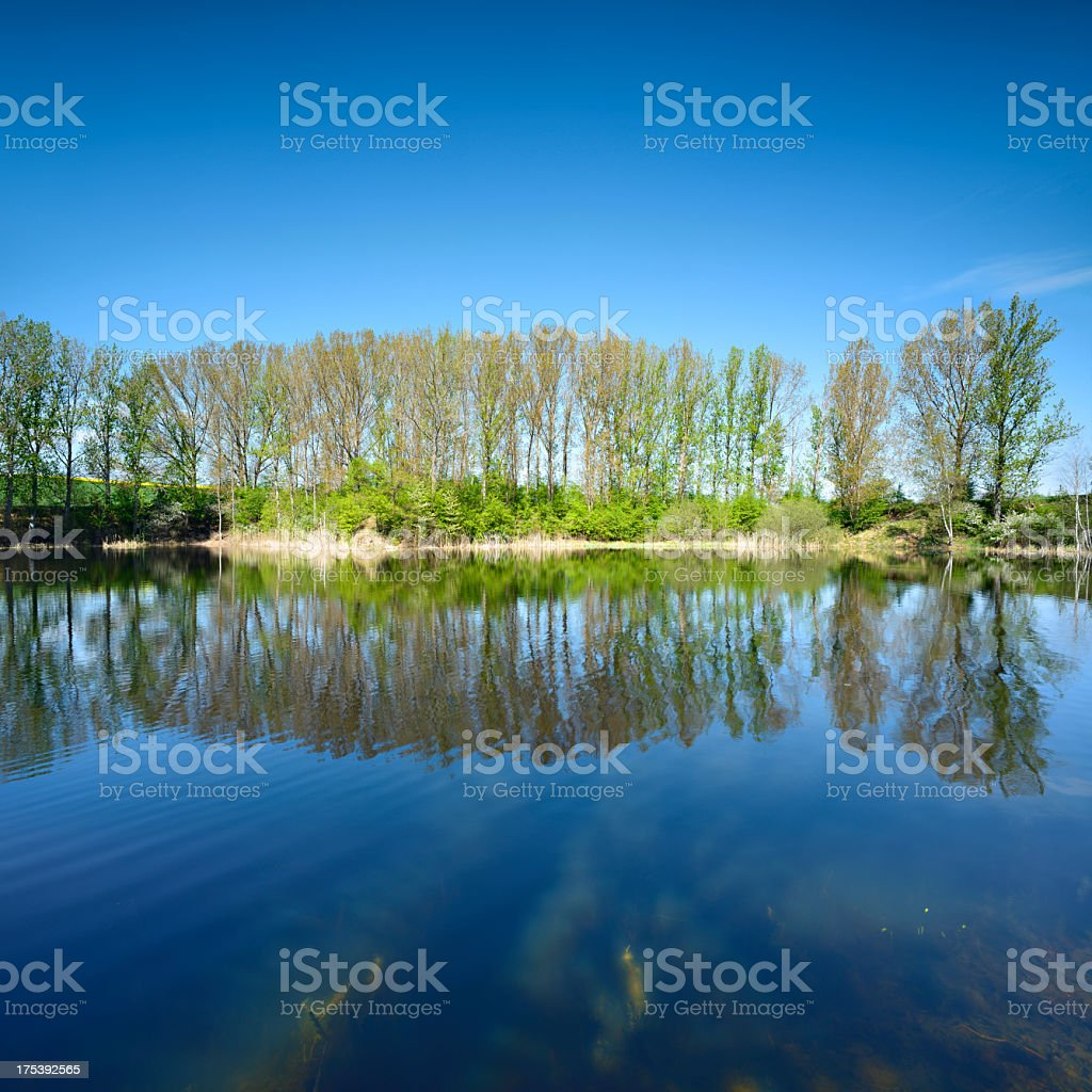Poplar Trees Reflecting in Lake - Early Spring royalty-free stock photo