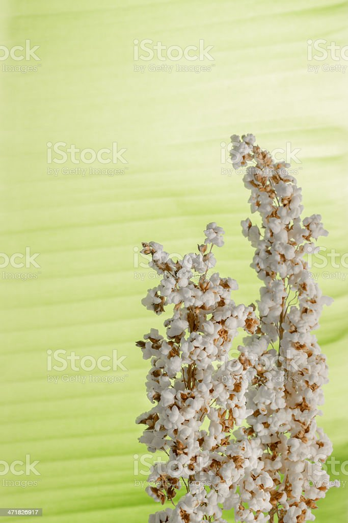 popped rice royalty-free stock photo