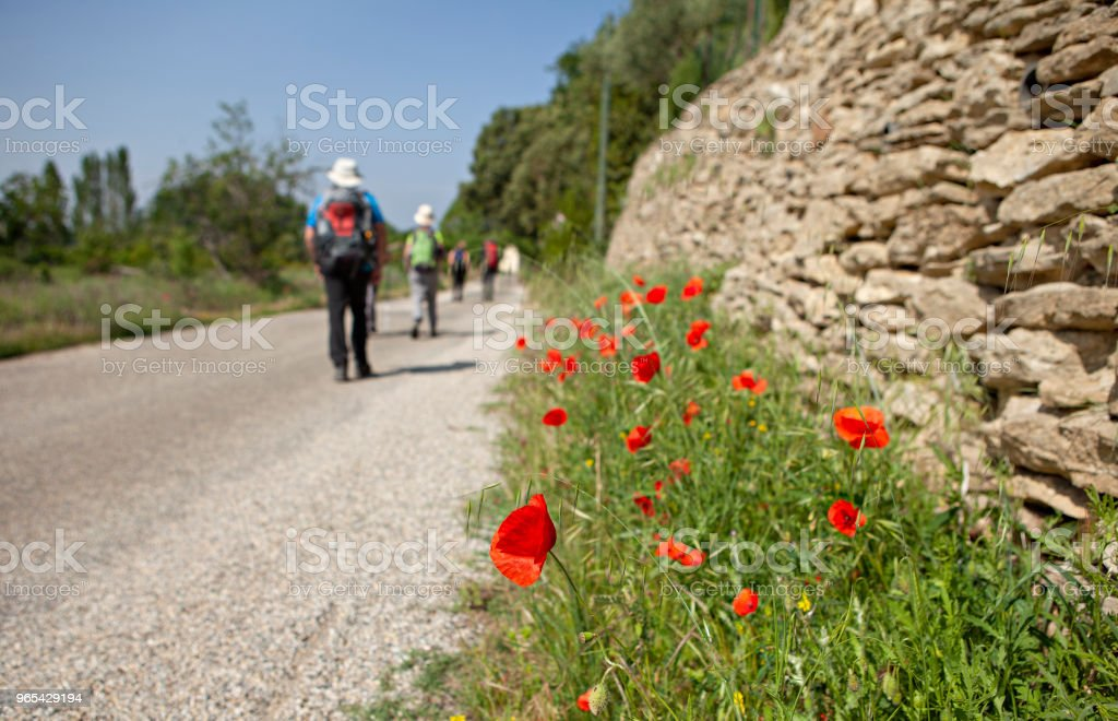 poppies and a group of hikers royalty-free stock photo