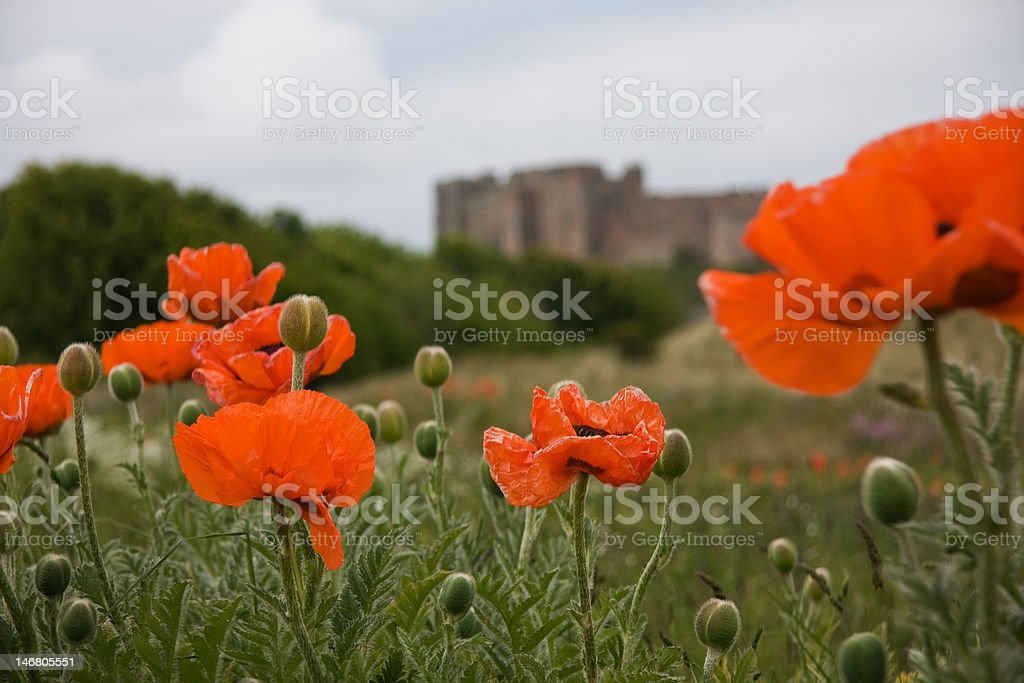 Poppies and castle royalty-free stock photo