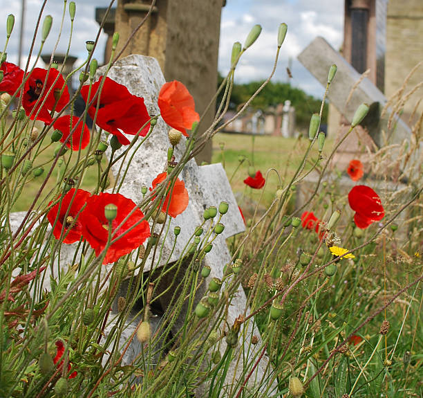 Poppies and Graves Poppies at Cemetery with Crosses somme stock pictures, royalty-free photos & images