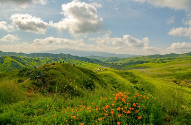Poppies and green hills line the trails in spring at Chino Hills park Tourists walking on trails surrounded by green hills and wildflowers in early spring at Chino Hills san bernardino california stock pictures, royalty-free photos & images