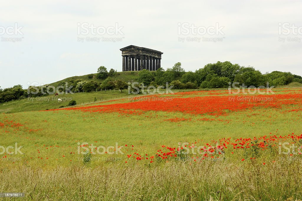 Poppies at Penshaw Monument, County Durham stock photo