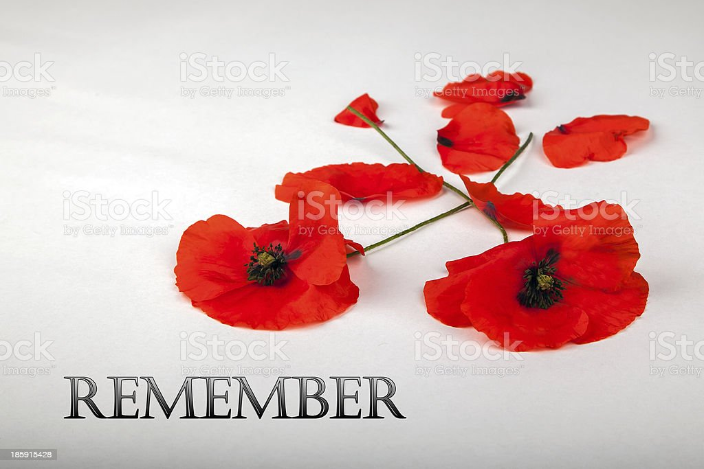 Poppies - for Remembrance Day, Remember royalty-free stock photo