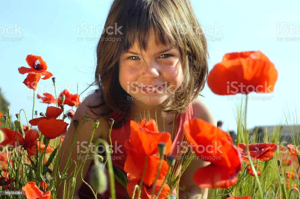Poppies gnome royalty-free stock photo