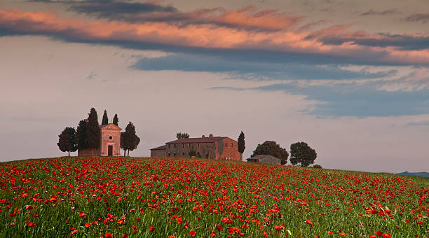 Poppies in Tuscany, Italy, with Chapel and Villa, Val d'Orcia Field of poppies in Val d'Orcia, Tuscany, Italy, near Capella di Vitaleta, chapel, flanked by cypress trees and a farmhouse or villa. The red poppies are in full flower and some long clouds in the sky reflect the colors of the sunset. Composite, horizontal color image with copy space. pienza stock pictures, royalty-free photos & images