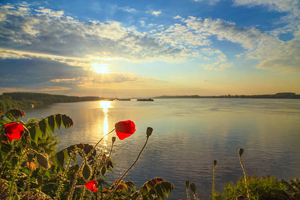 Poppies on the Danube bank in the spring stock photo