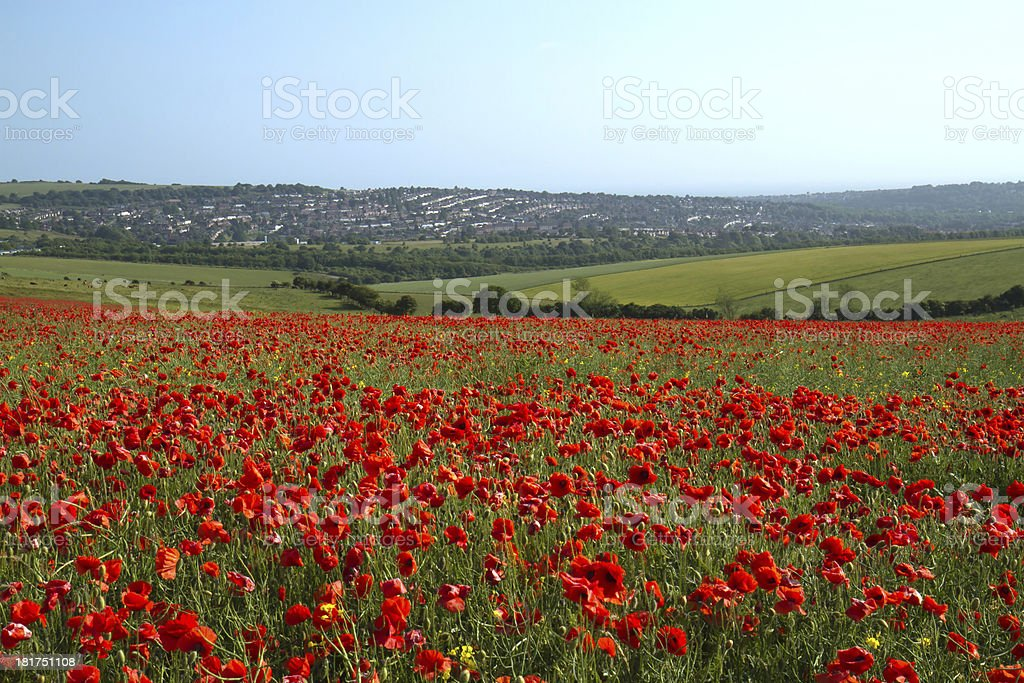 Poppy Field and Brighton stock photo