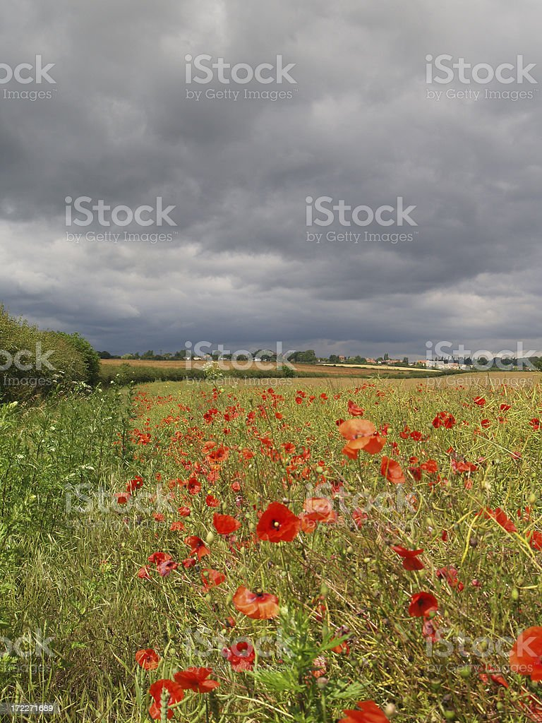 Poppy field and clouds vertical stock photo