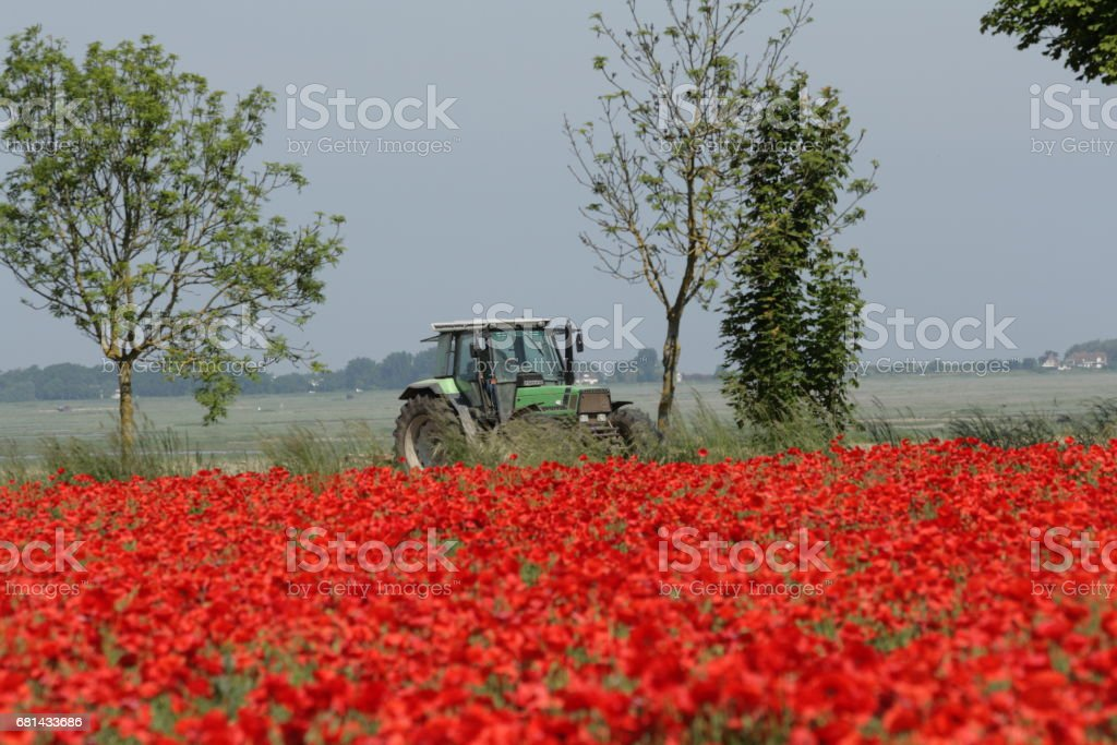 Poppy Field and tractor in spring, Picardie in France royalty-free stock photo