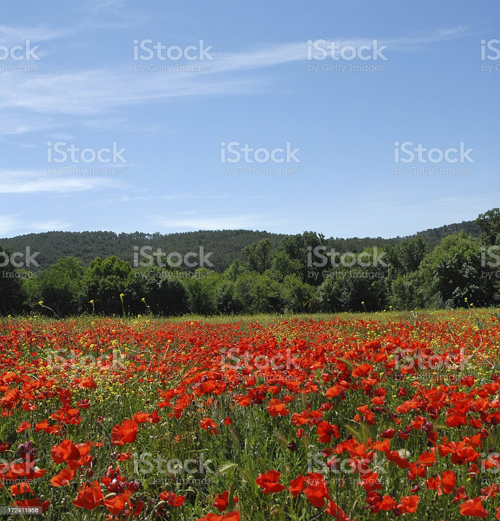 Poppy Field, France royalty-free stock photo