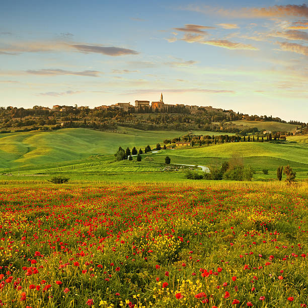 Poppy field  in Tuscany at sunset Poppy field  in Tuscany at sunset - the town of Pienza in the background. pienza stock pictures, royalty-free photos & images