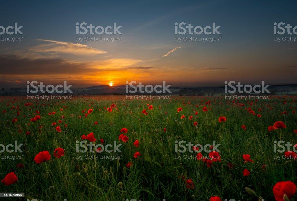 Poppy Field Kingswinford. stock photo