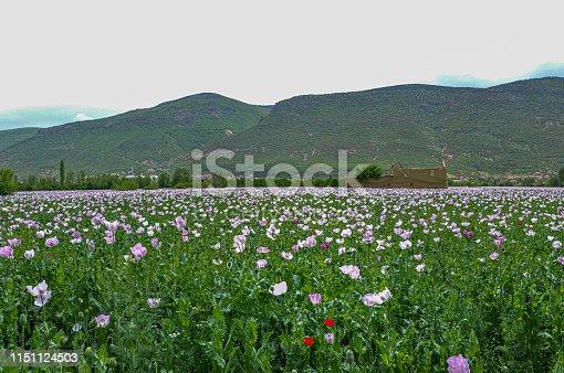istock Poppy fields 1151124503