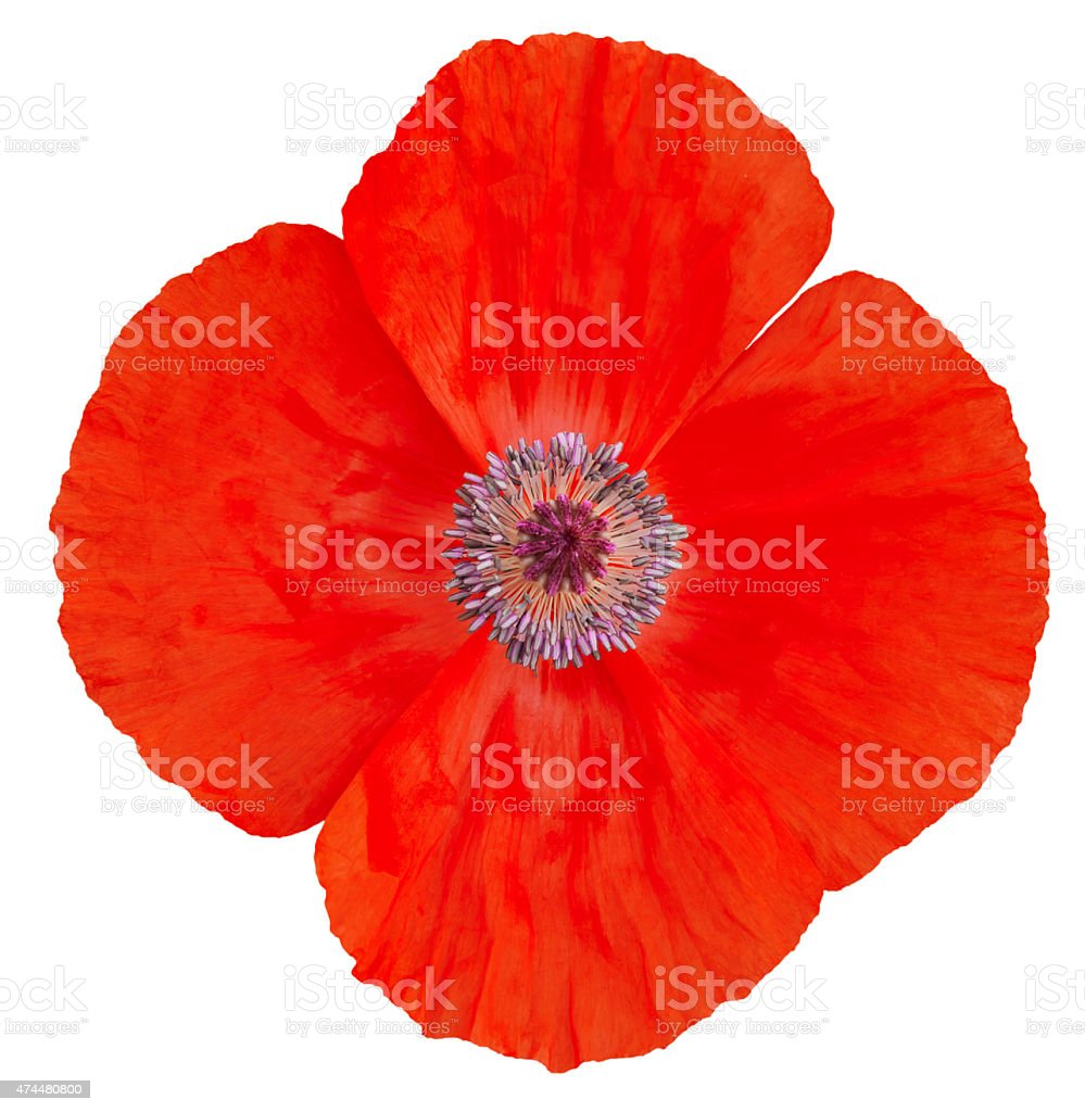 Poppy Flower Remembrance Day Stock Photo More Pictures Of 2015