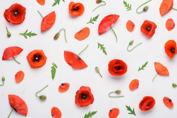 Poppy flowers pattern on concrete background