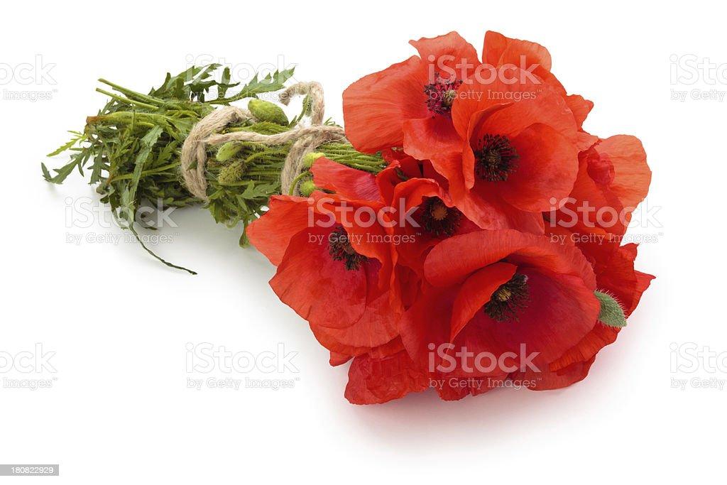 Poppy flowers. stock photo