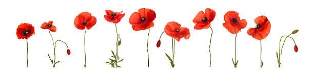Poppy flowers picture id181881207?b=1&k=6&m=181881207&s=612x612&w=0&h=8iqp6rkh9alfedz1xt 8azaqjjbj rbgb46p3aqyi q=