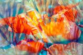poppy flowers retro style  double exposure