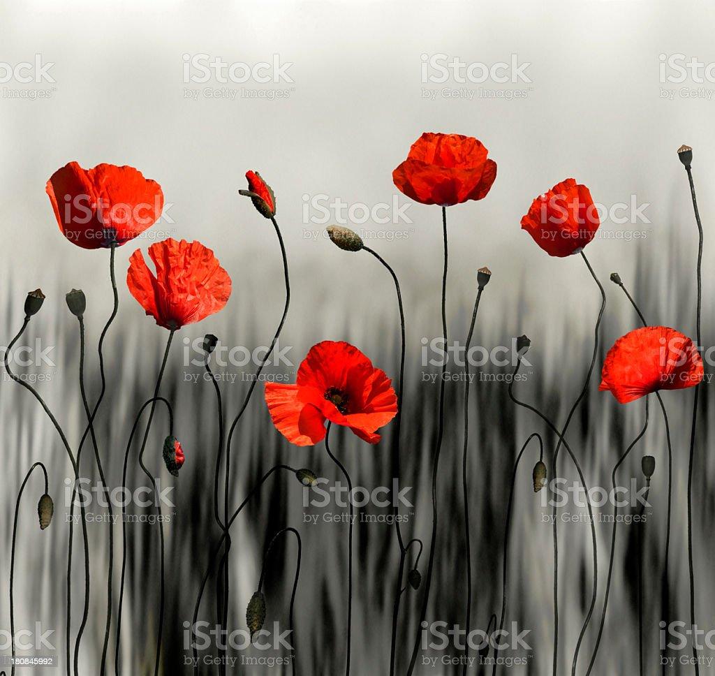 Poppy modern art image stock photo