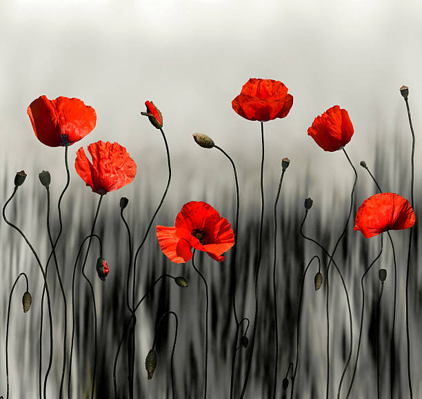 poppy moderne art bild - farbfeldmalerei stock-fotos und bilder