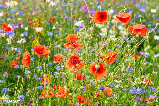 Beautiful summer meadow filled with wonderful flowers