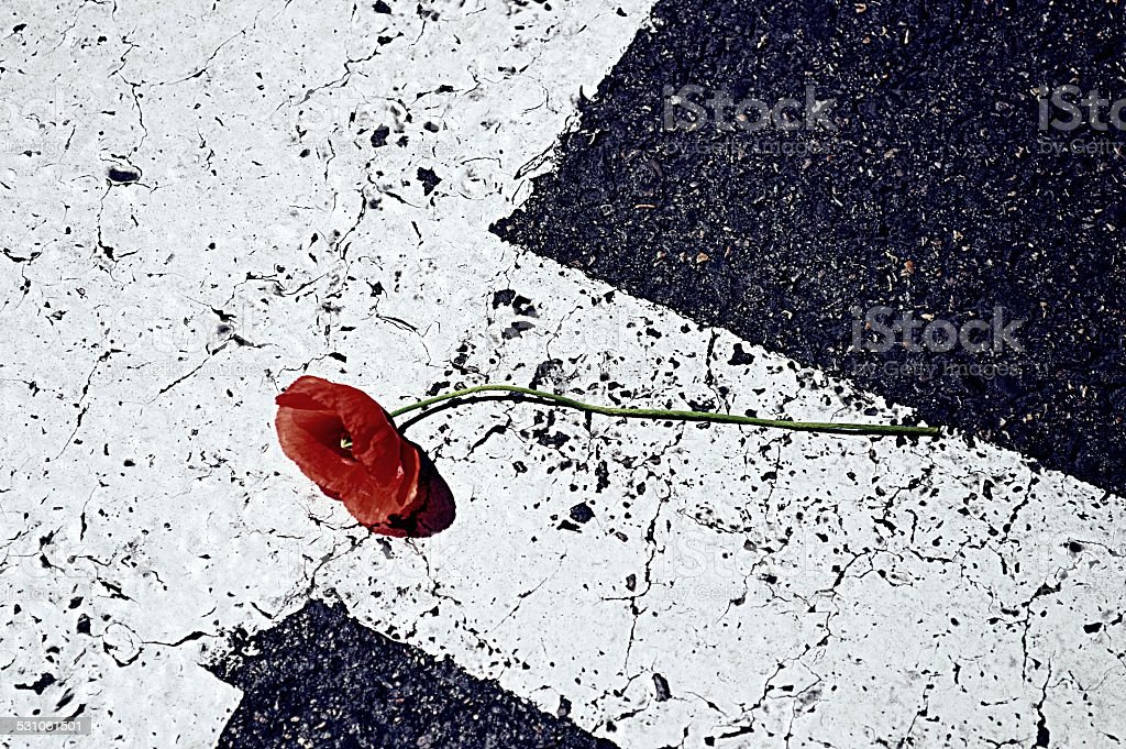 Poppy en te road - foto de stock
