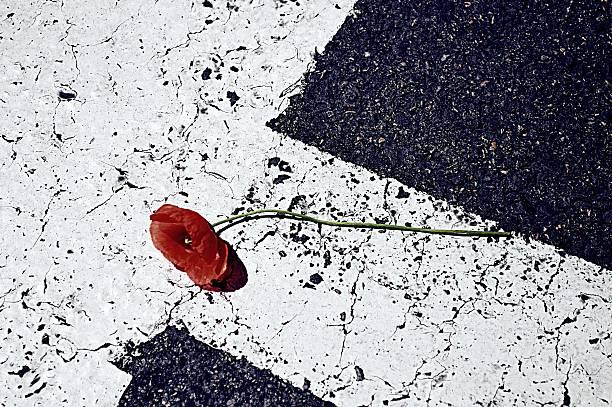 Poppy en te road - foto de stock
