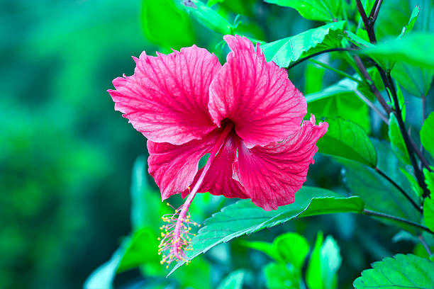 Top 60 Amapola Stock Photos Pictures And Images Istock