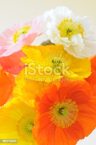 Poppy Stock Photo & More Pictures of Bunch of Flowers