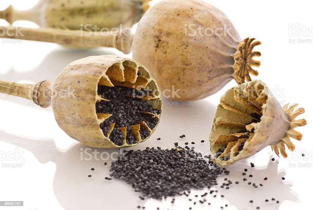 Poppy Seed royalty-free stock photo