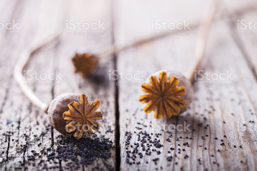 Poppy seeds and poppy heads stock photo