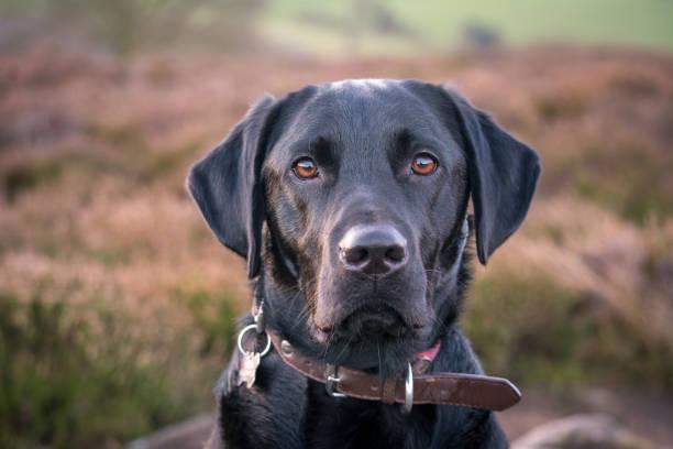 Poppy the dog picture id1080903528?b=1&k=6&m=1080903528&s=612x612&w=0&h=1fgt0t1g9bccn7l8kqpuvbuht gi96c7uey7vsoe4hi=