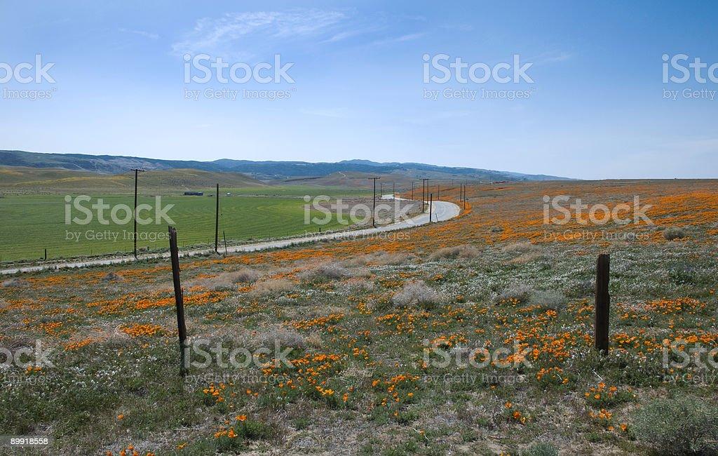 Poppyfields royalty-free stock photo