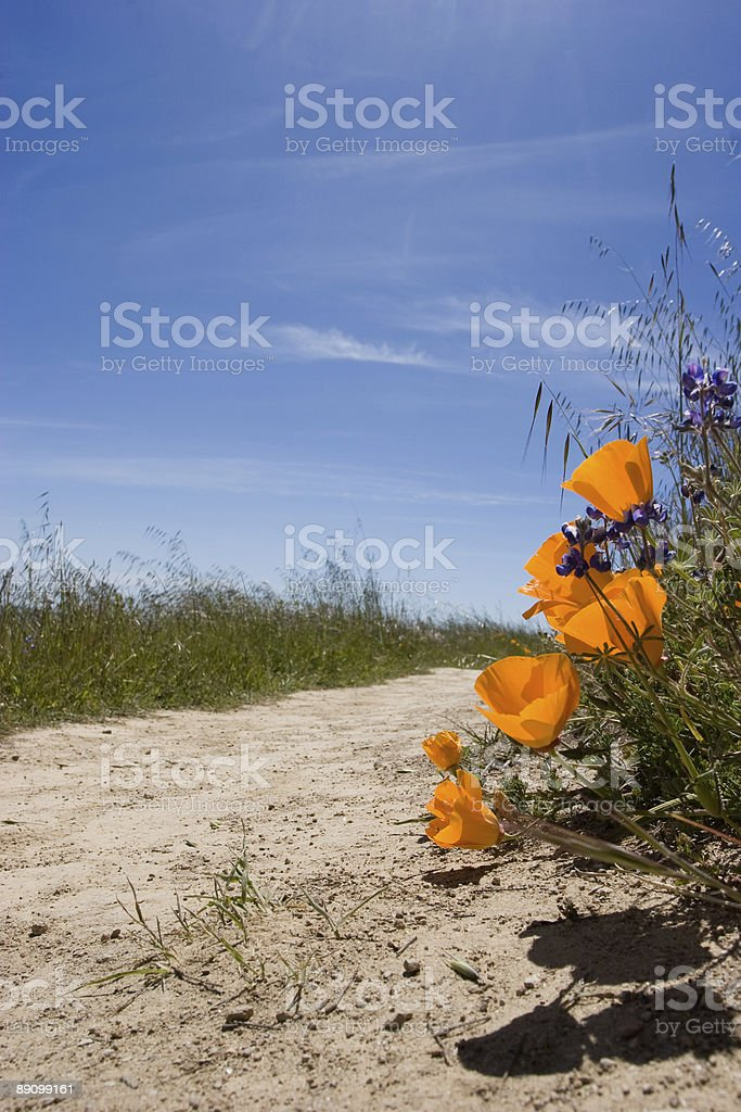 Poppy's on the Trail stock photo