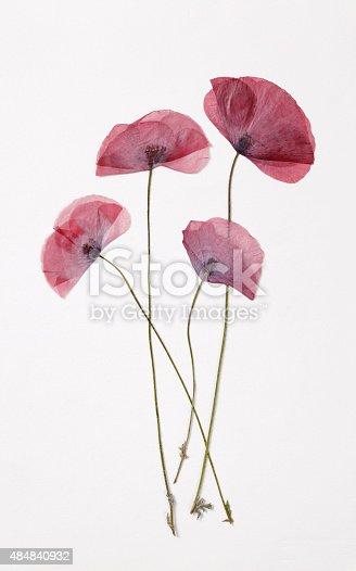 Poppys -Dry