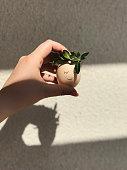 Popular cute egg with a wreath on his head.