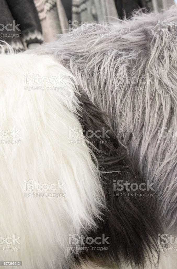 Close up of Icelandic lamb skins for sale in Iceland. they are...