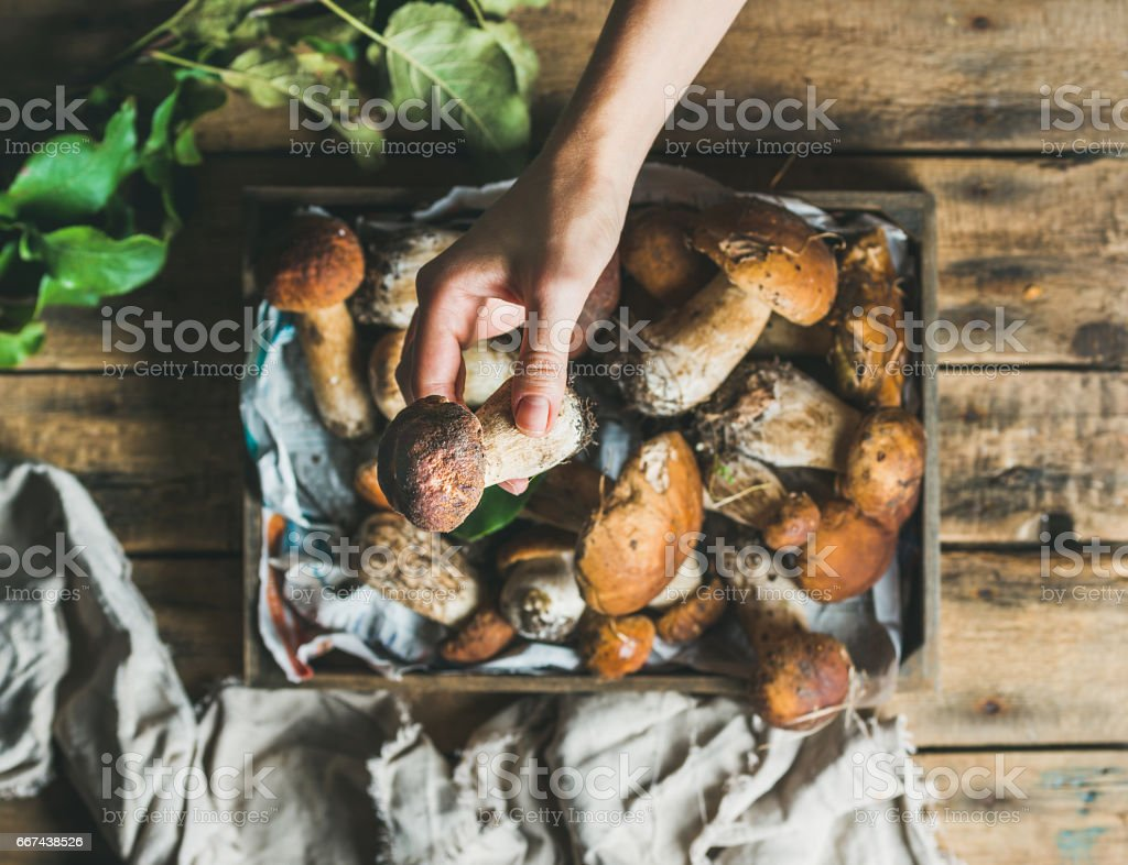 Porcini mushrooms in wooden tray and woman's hand holding mushroom stock photo