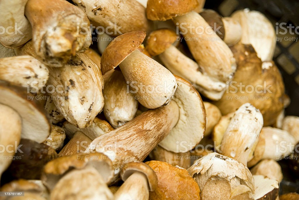 Porcini Mushrooms stock photo